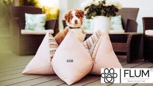 Ersteigern Sie einen 100 Euro Gutschein für ein Hundekissen der FLUM MANUFAKTUR